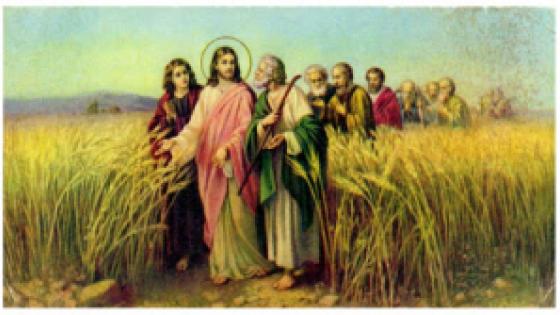 /fot.: www.catholicsteward.com /